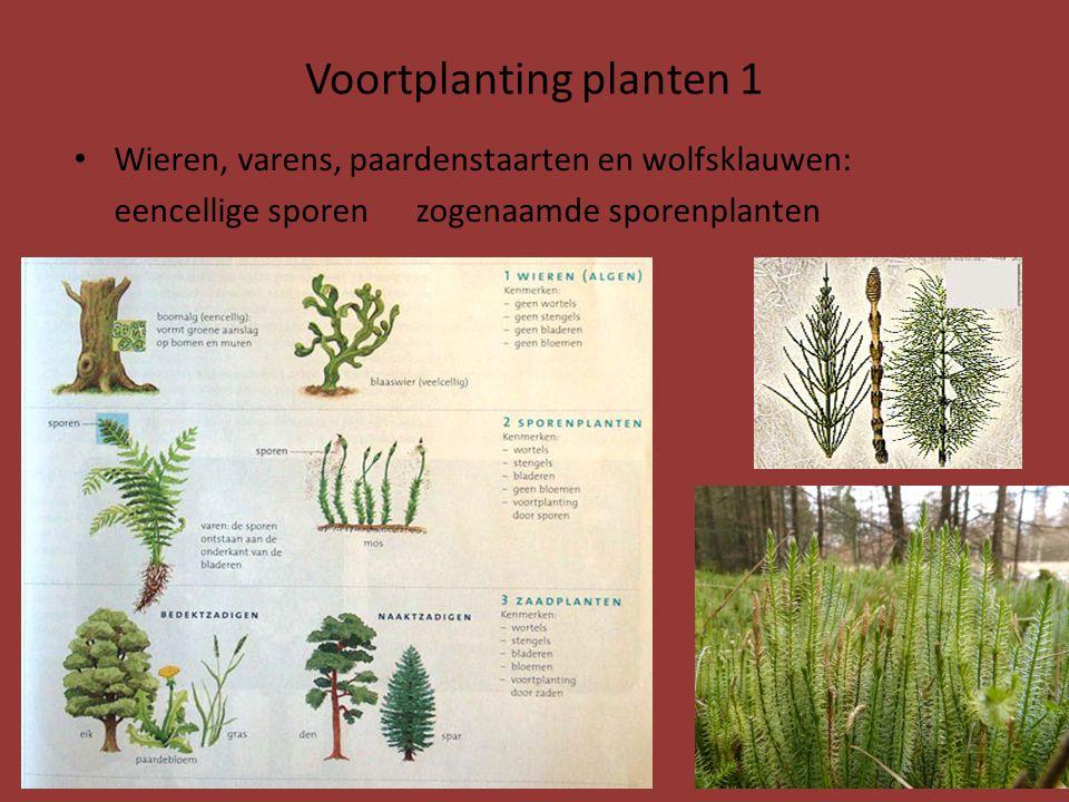 Voortplanting planten 1