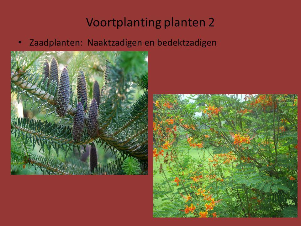 Voortplanting planten 2
