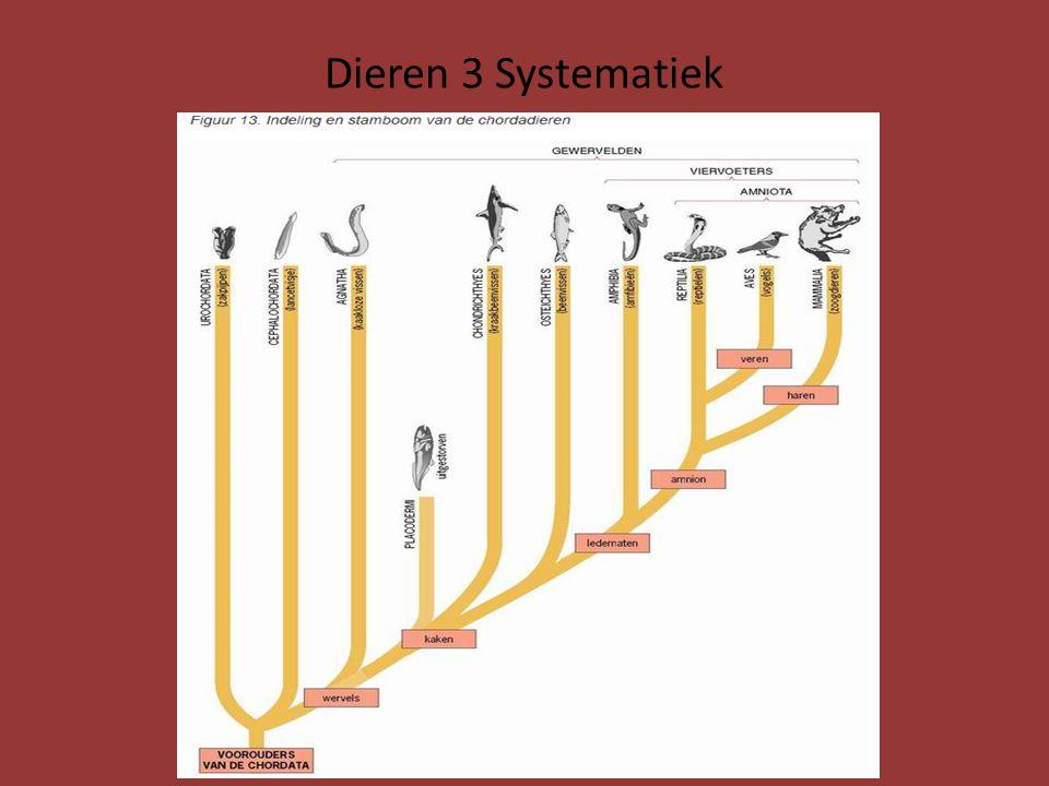 Dieren 3 Systematiek