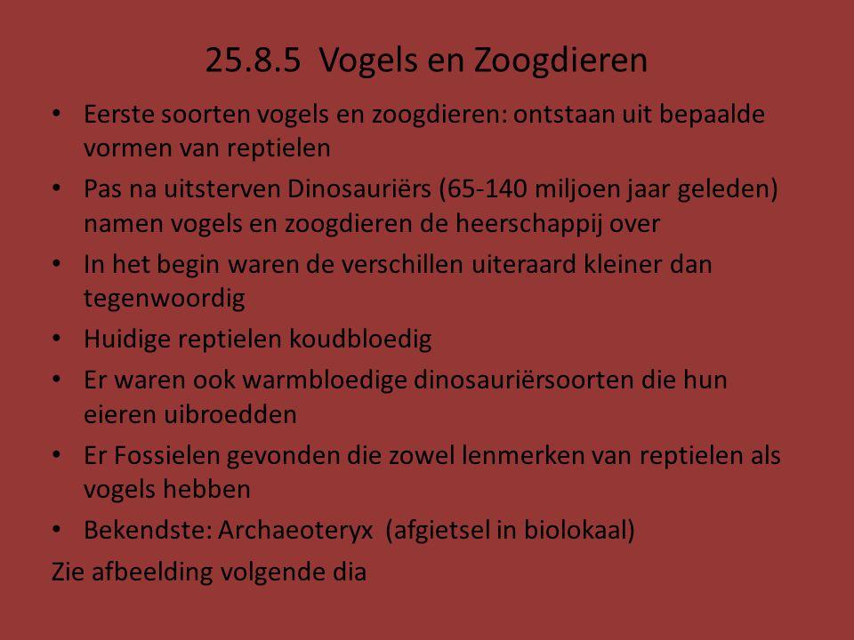 25.8.5 Vogels en Zoogdieren Eerste soorten vogels en zoogdieren: ontstaan uit bepaalde vormen van reptielen.