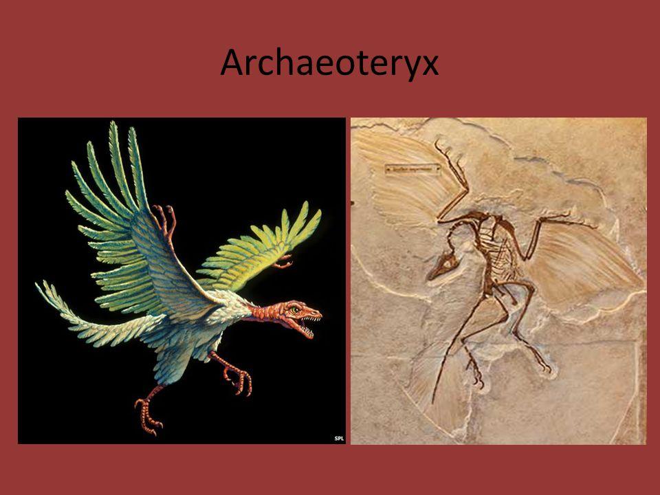 Archaeoteryx
