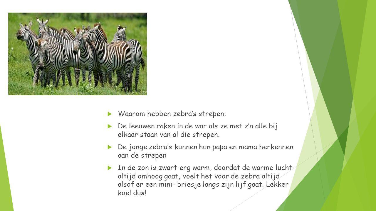 Waarom hebben zebra's strepen: