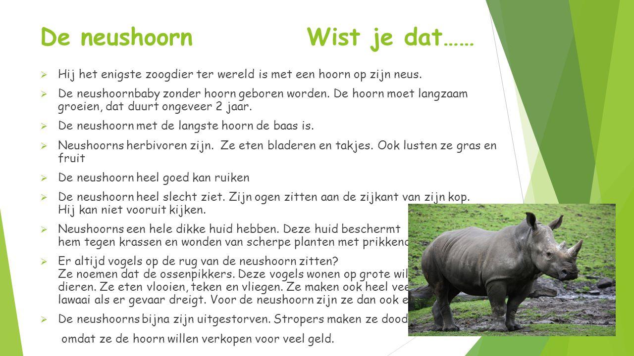 De neushoorn Wist je dat……