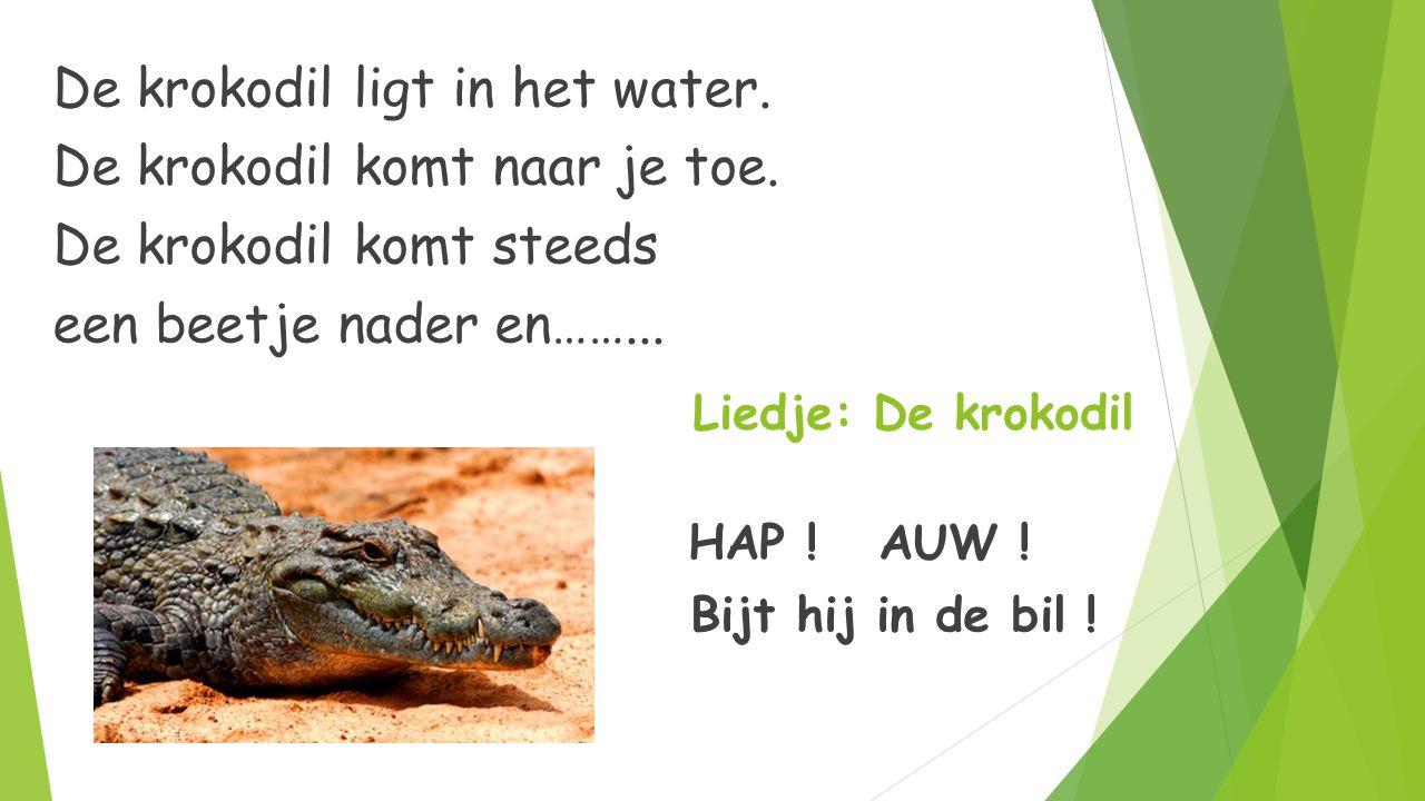 De krokodil ligt in het water. De krokodil komt naar je toe.