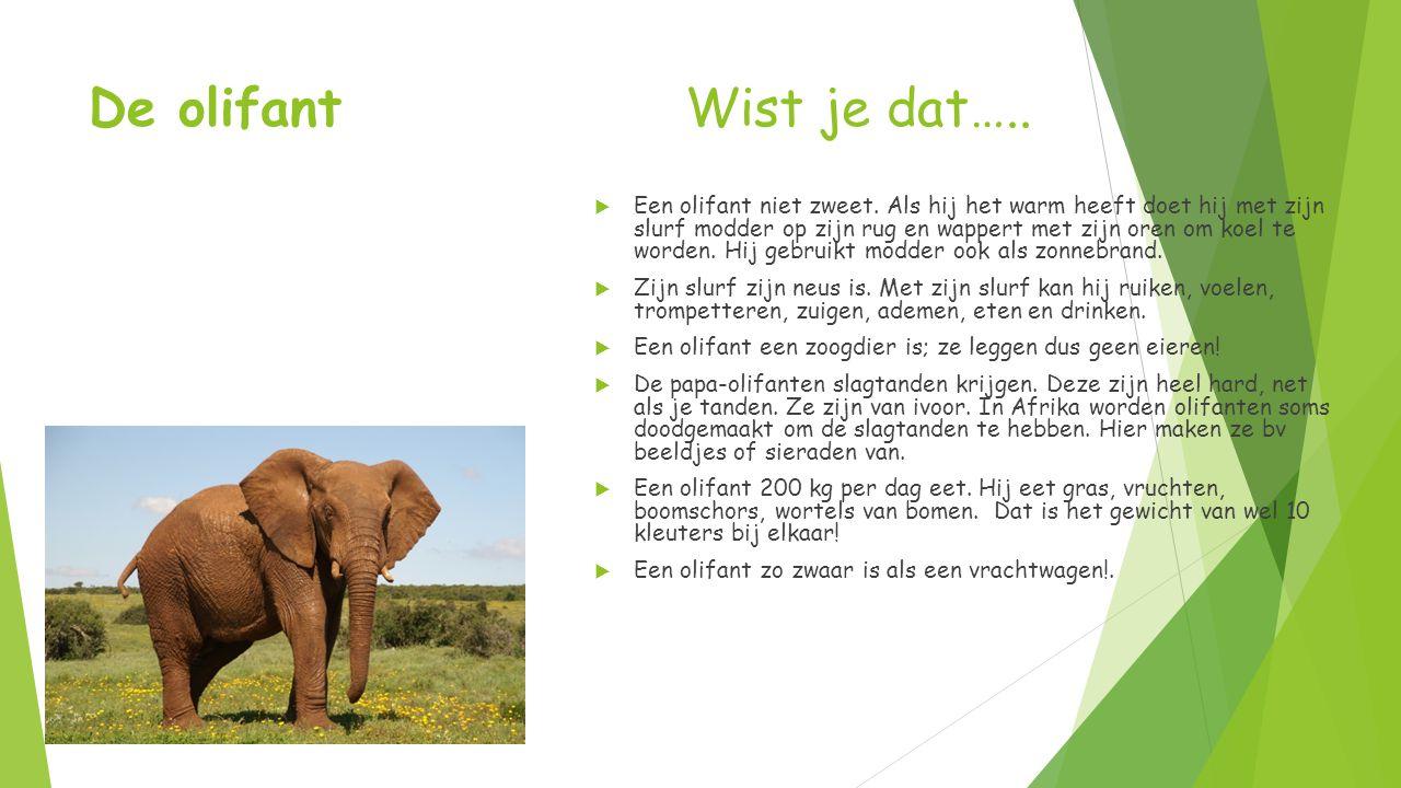 De olifant Wist je dat…..