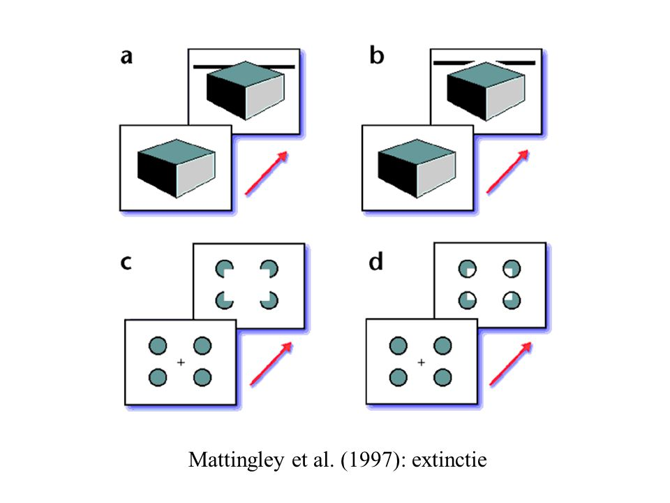 Mattingley et al. (1997): extinctie