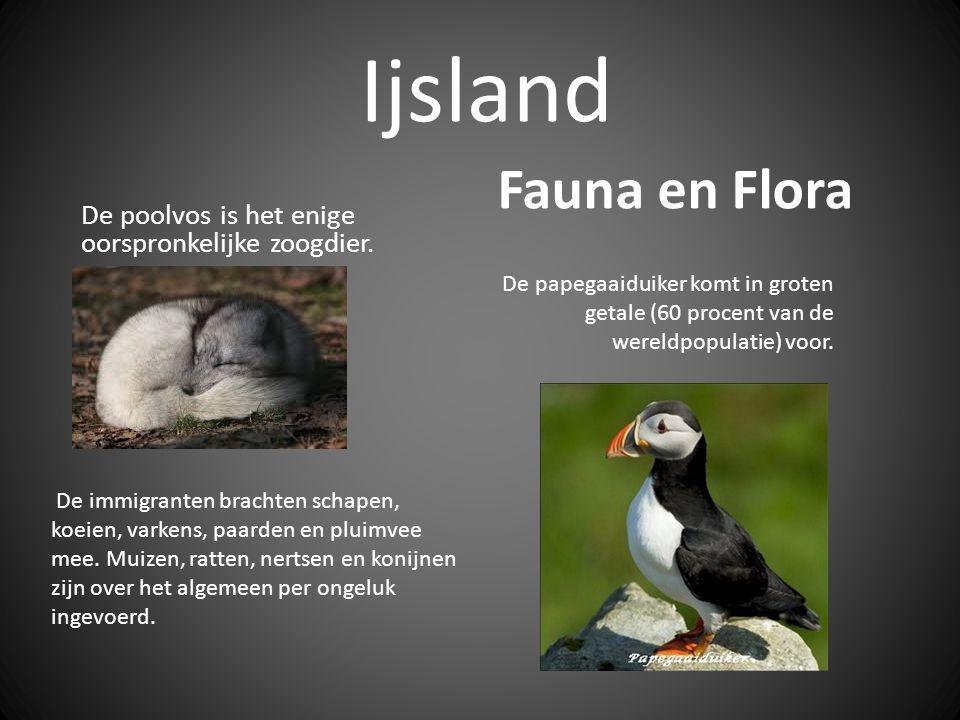 Ijsland Fauna en Flora. De poolvos is het enige oorspronkelijke zoogdier.