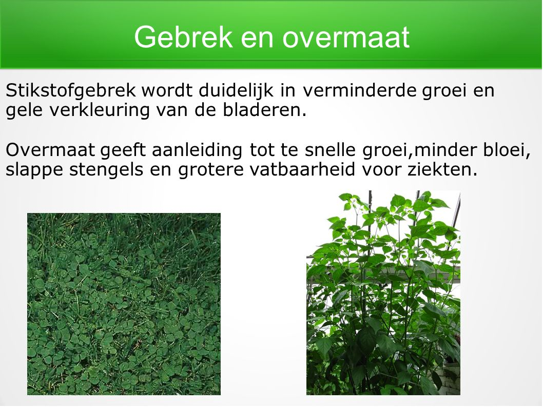 Gebrek en overmaat Stikstofgebrek wordt duidelijk in verminderde groei en. gele verkleuring van de bladeren.