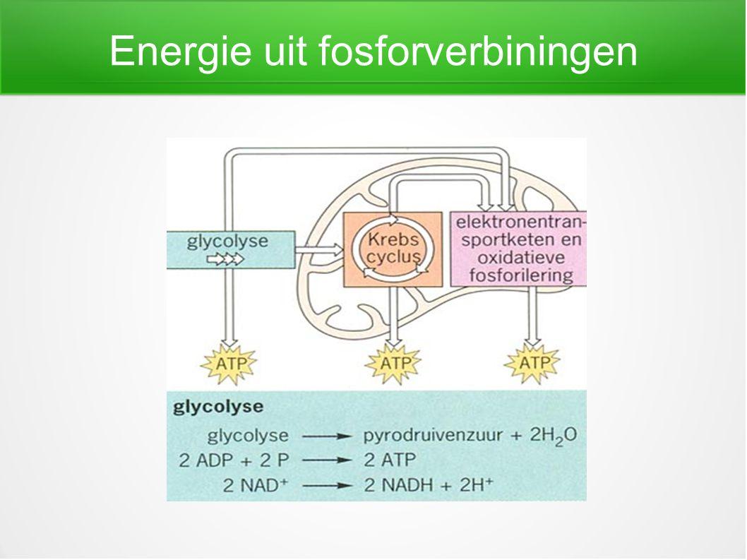 Energie uit fosforverbiningen