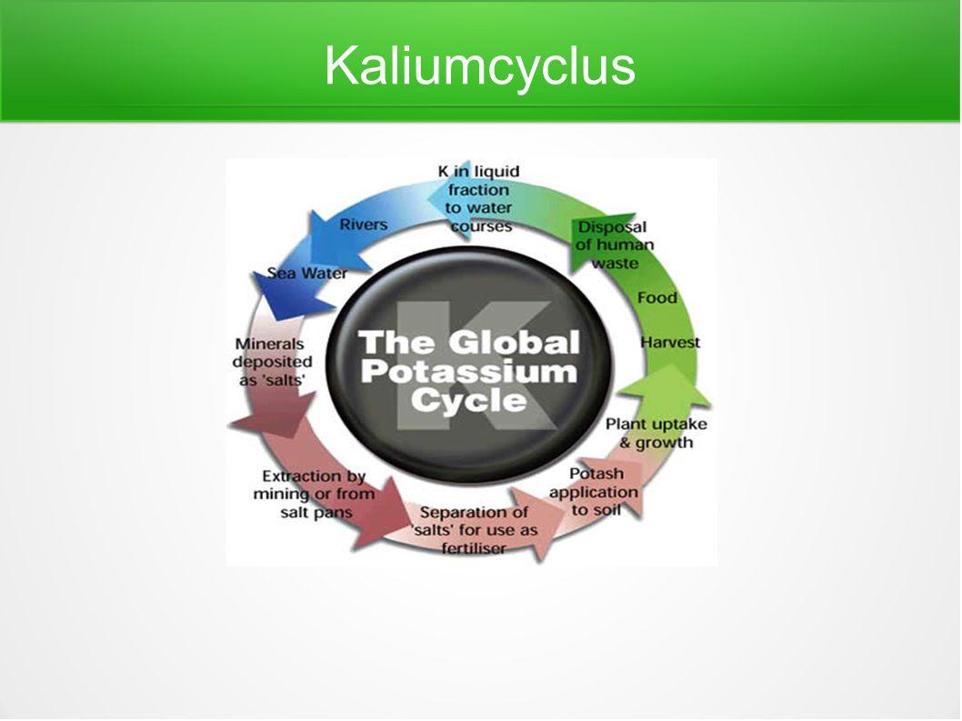 Kaliumcyclus