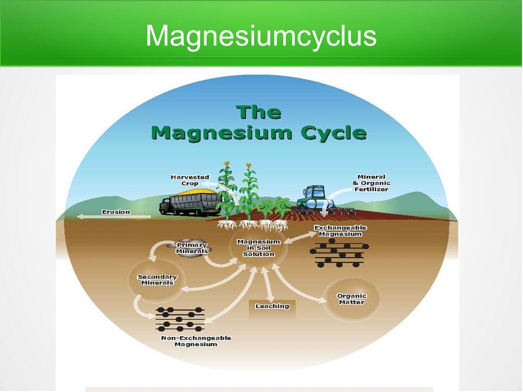 Magnesiumcyclus