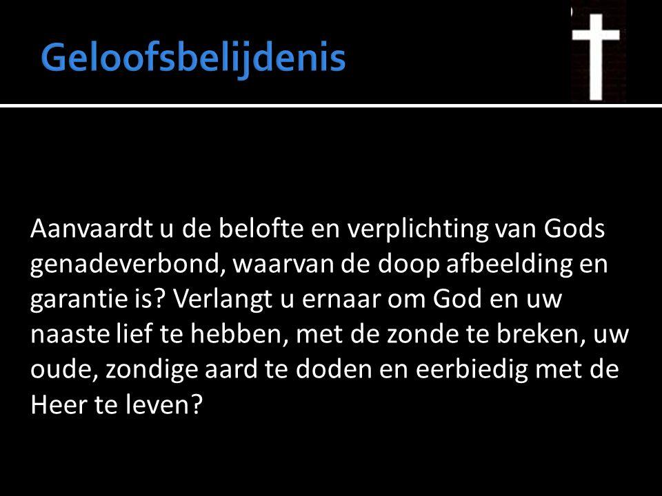 Geloofsbelijdenis