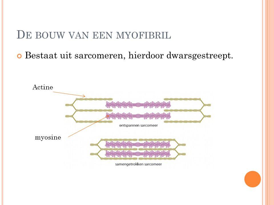 De bouw van een myofibril