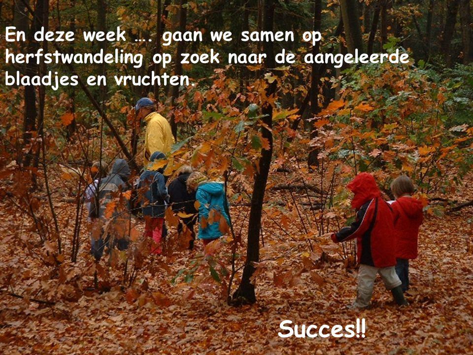 En deze week …. gaan we samen op herfstwandeling op zoek naar de aangeleerde blaadjes en vruchten.