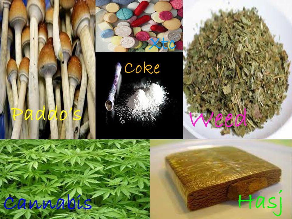 Xtc Coke Paddo's Weed Hasj Cannabis