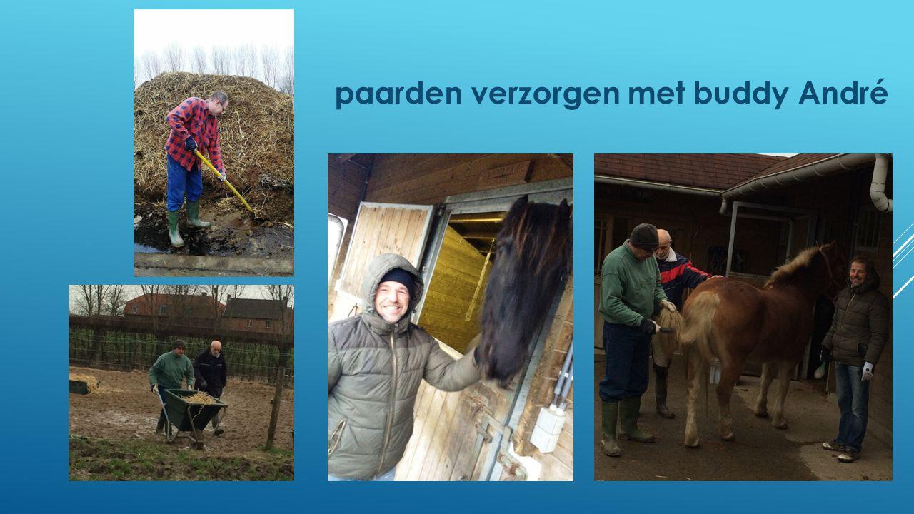 paarden verzorgen met buddy André