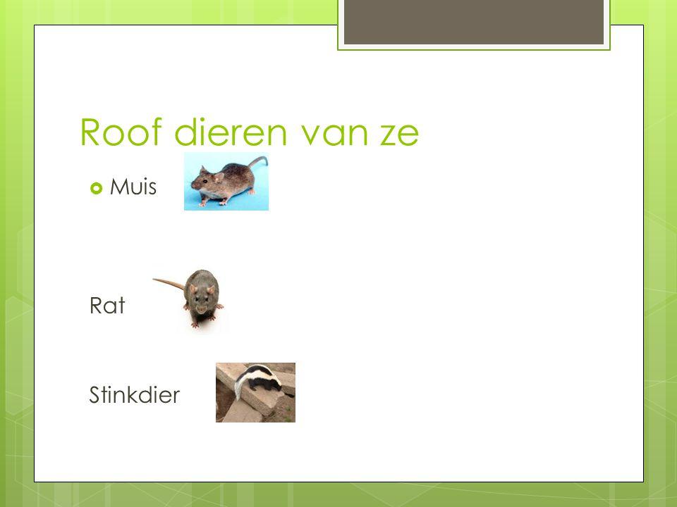 Roof dieren van ze Muis Rat Stinkdier