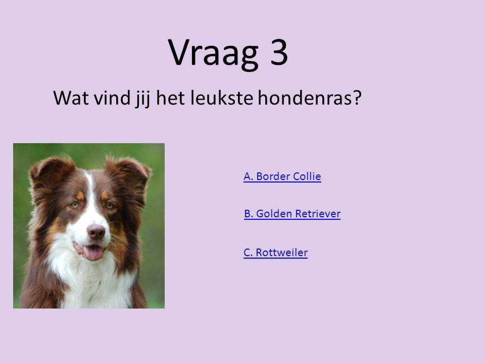 Vraag 3 Wat vind jij het leukste hondenras A. Border Collie