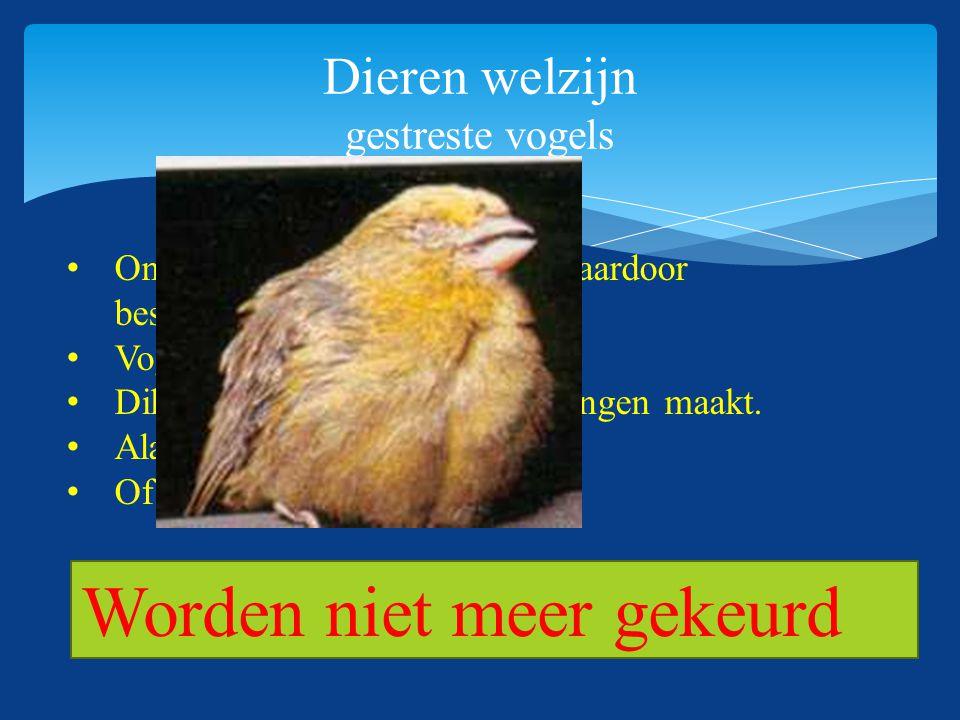 Dieren welzijn gestreste vogels