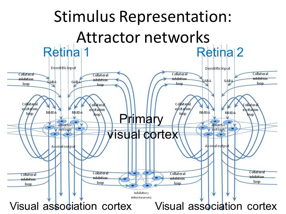 Stimulus Representation: Attractor networks
