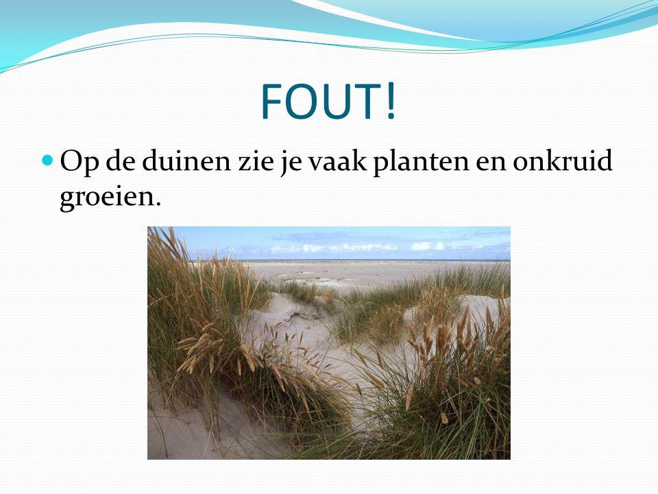 FOUT! Op de duinen zie je vaak planten en onkruid groeien.