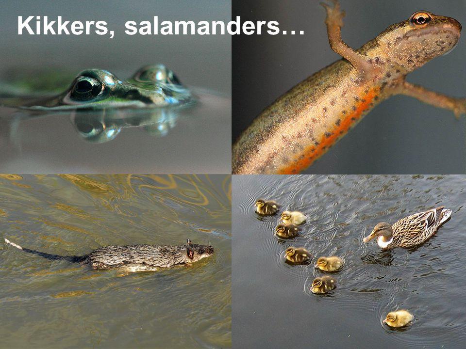 Kikkers, salamanders…