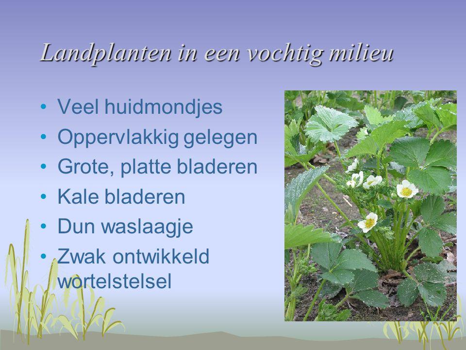 Landplanten in een vochtig milieu