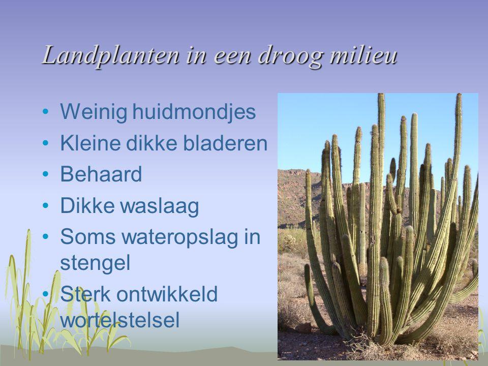Landplanten in een droog milieu