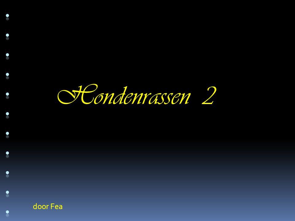 ........... Hondenrassen 2 door Fea