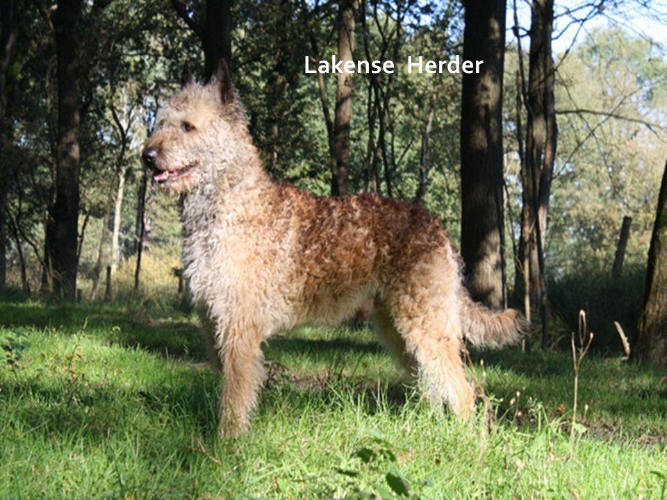 Lakense Herder