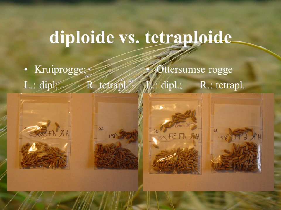 diploide vs. tetraploide