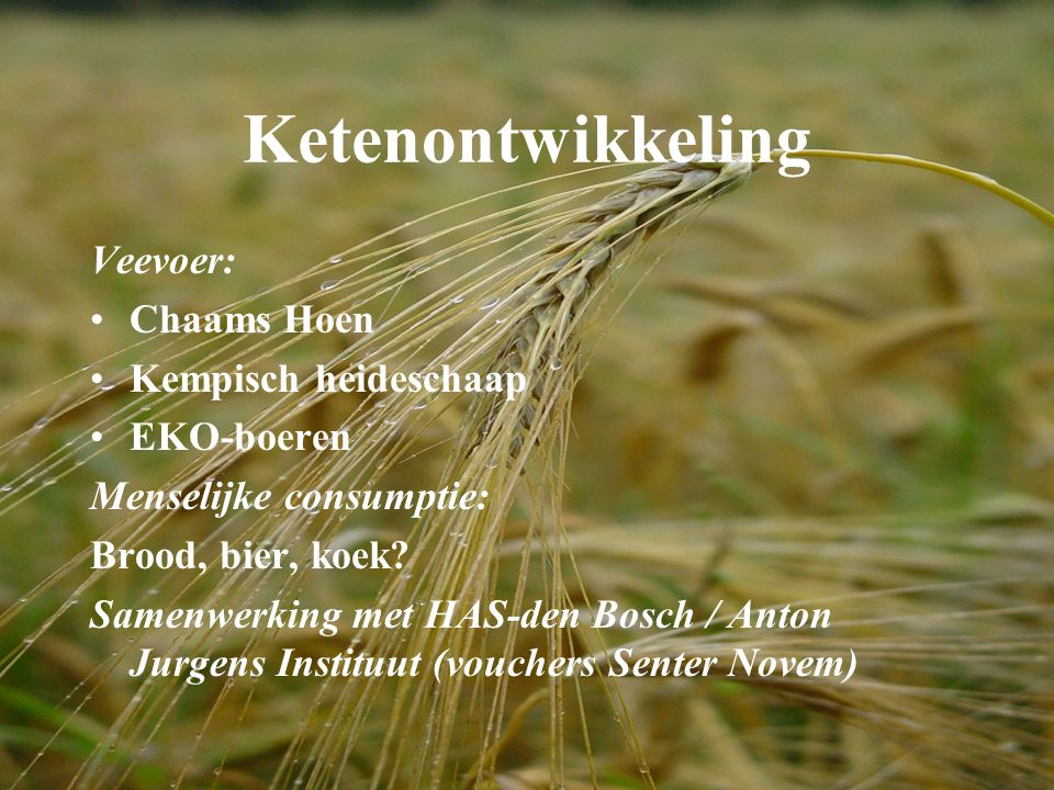 Ketenontwikkeling Veevoer: Chaams Hoen Kempisch heideschaap EKO-boeren