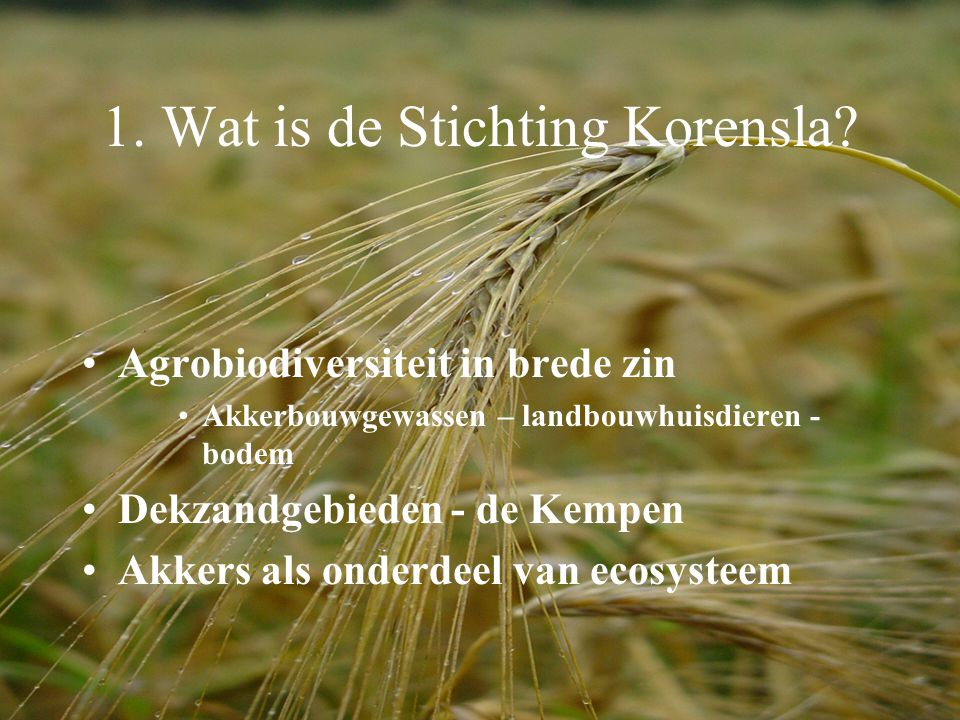 1. Wat is de Stichting Korensla