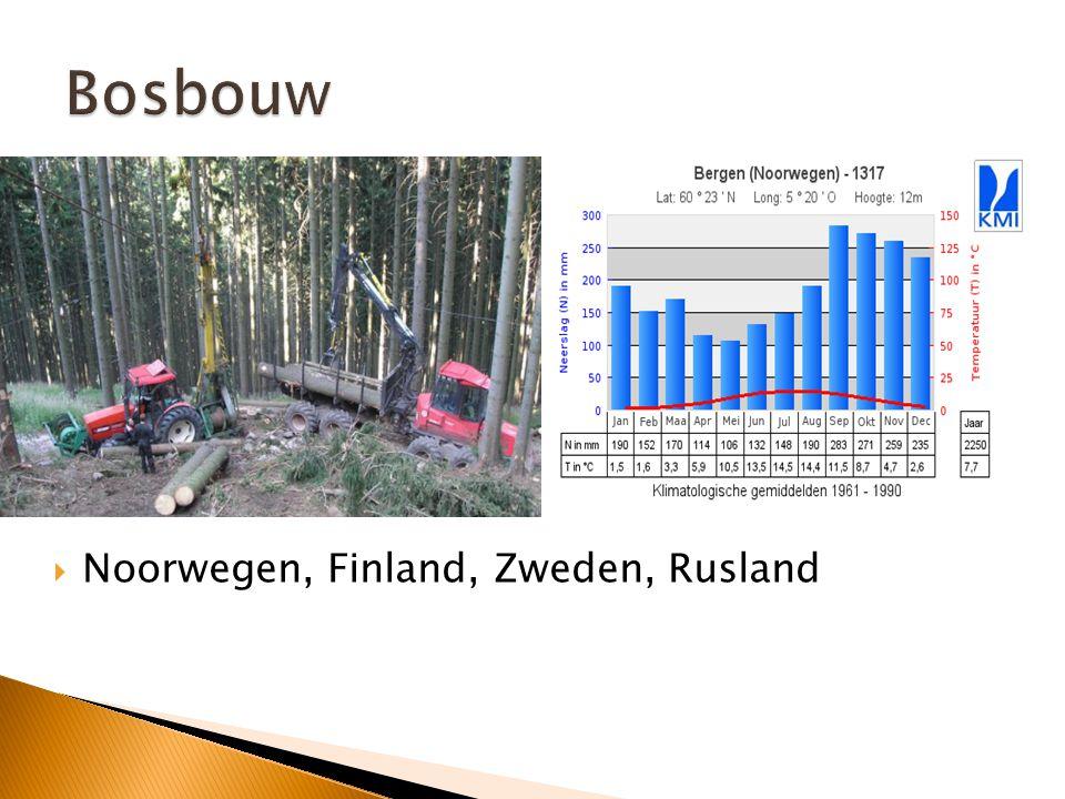 Bosbouw Noorwegen, Finland, Zweden, Rusland