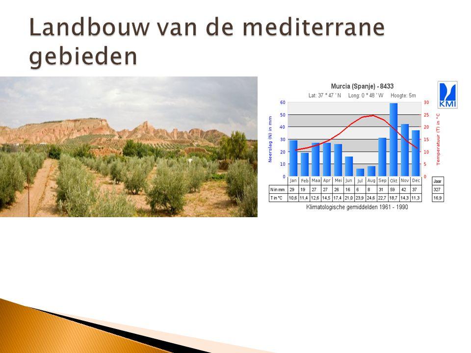 Landbouw van de mediterrane gebieden