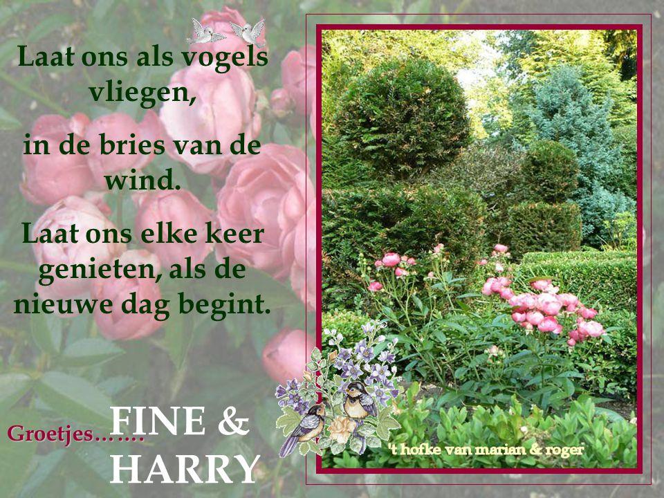 FINE & HARRY Laat ons als vogels vliegen, in de bries van de wind.