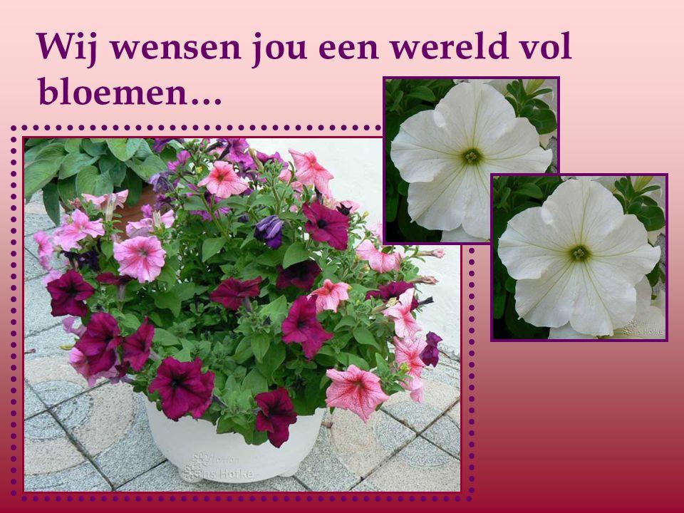 Wij wensen jou een wereld vol bloemen…