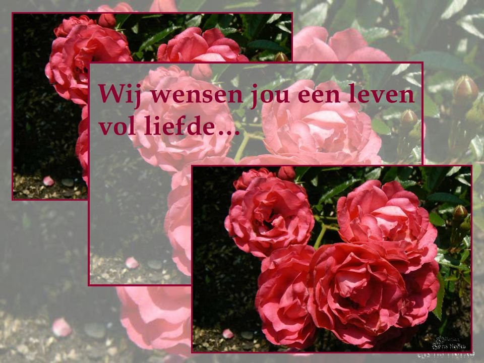 Wij wensen jou een leven vol liefde…