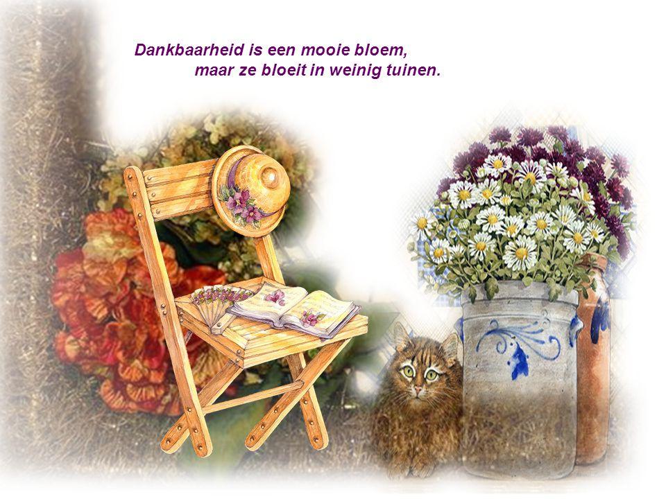 Dankbaarheid is een mooie bloem,