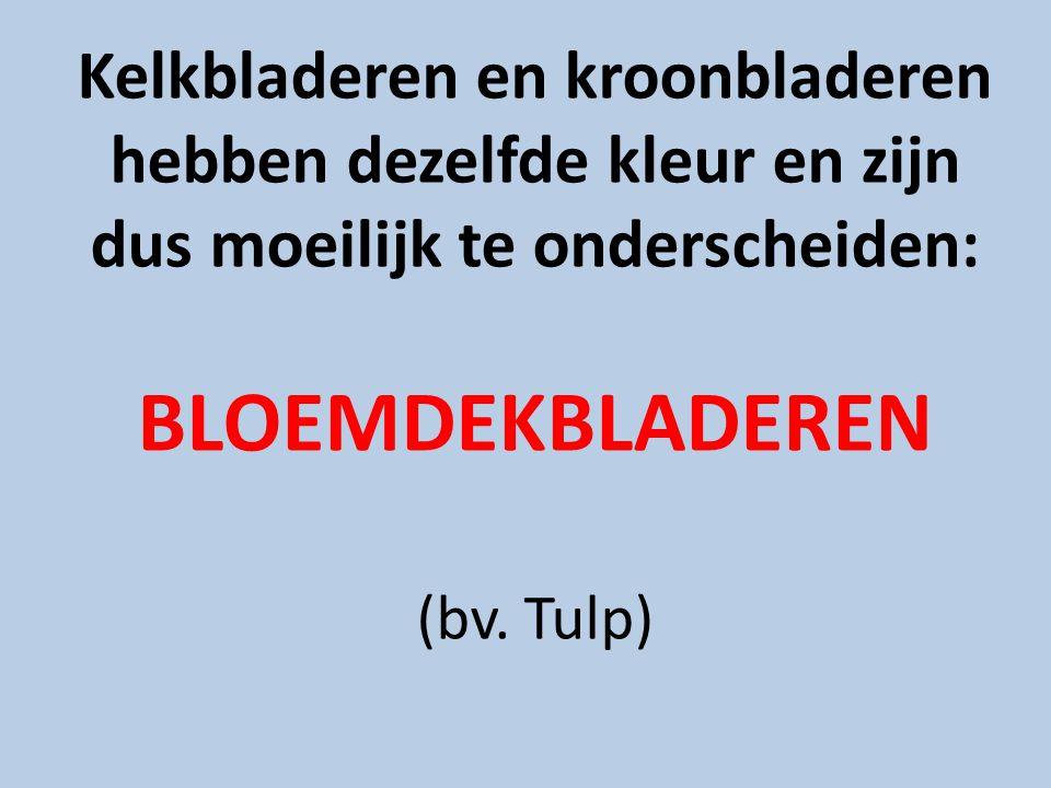 Kelkbladeren en kroonbladeren hebben dezelfde kleur en zijn dus moeilijk te onderscheiden: BLOEMDEKBLADEREN (bv.