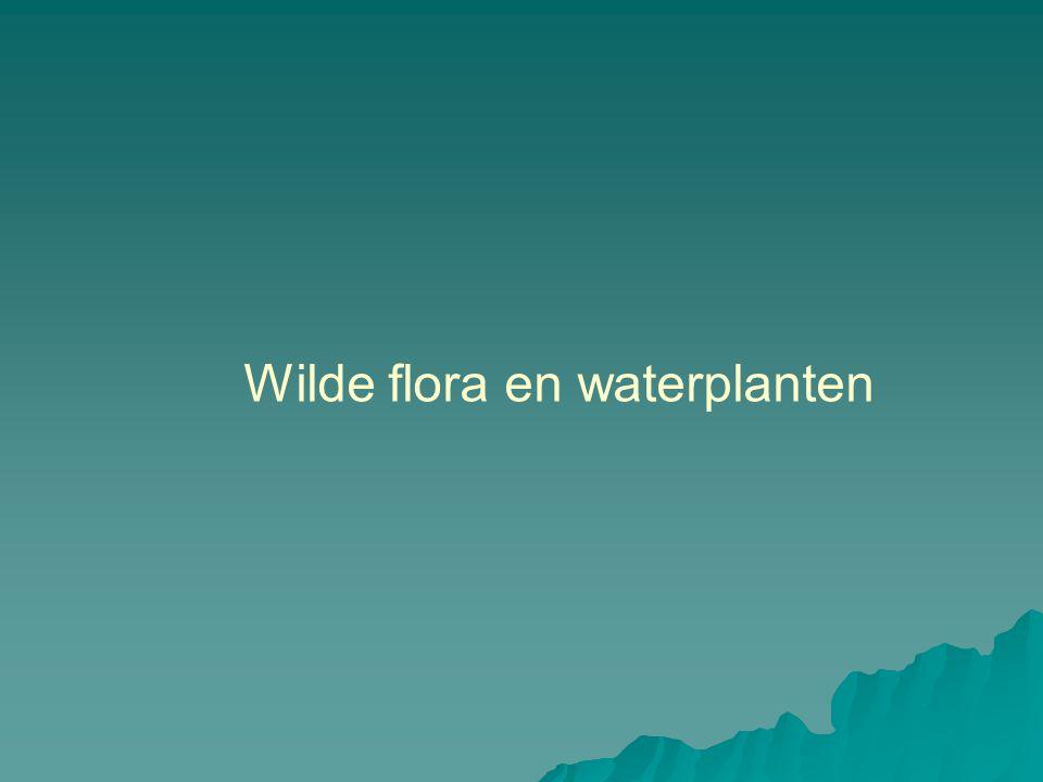 Wilde flora en waterplanten
