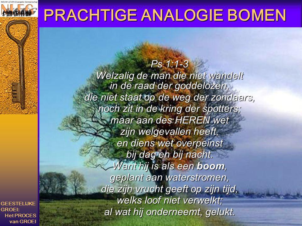 PRACHTIGE ANALOGIE BOMEN