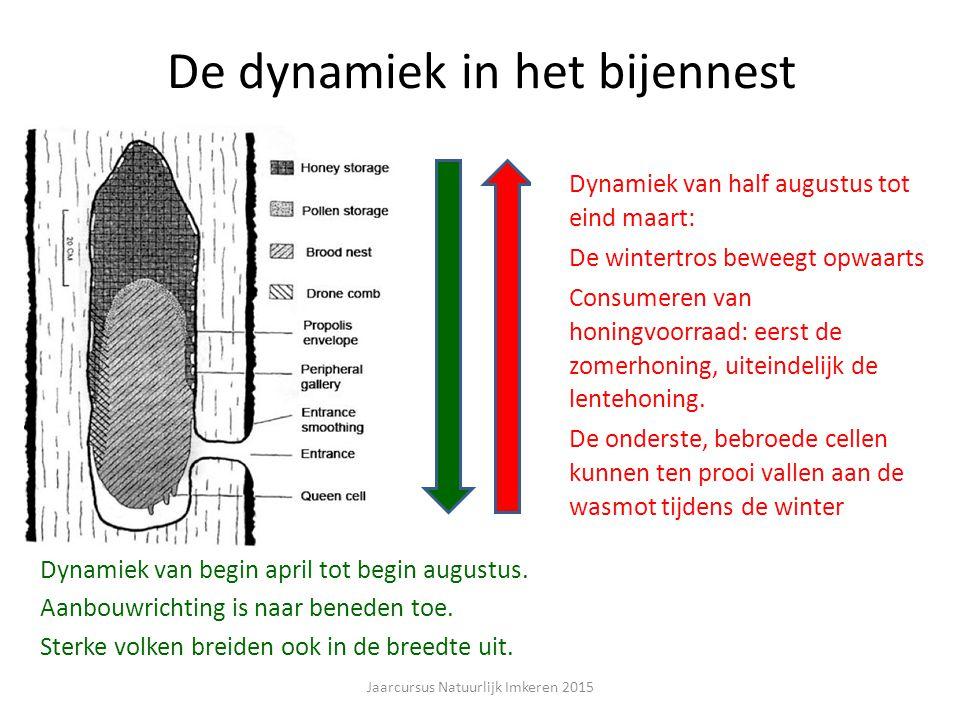 De dynamiek in het bijennest