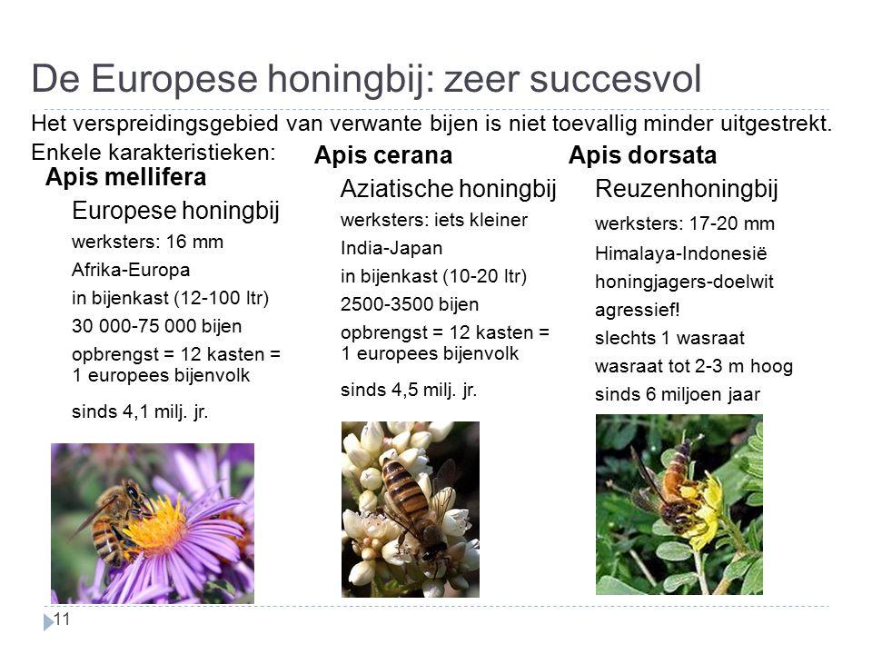 De Europese honingbij: zeer succesvol
