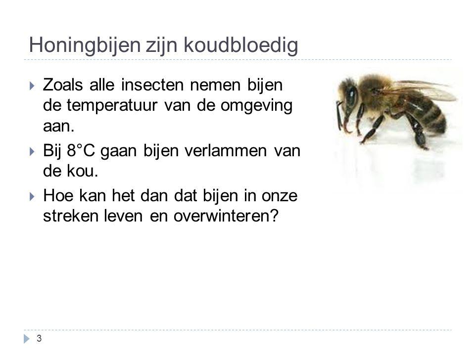 Honingbijen zijn koudbloedig