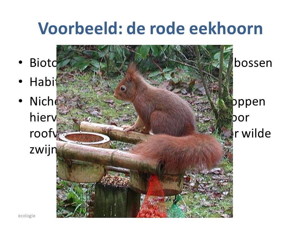 Voorbeeld: de rode eekhoorn