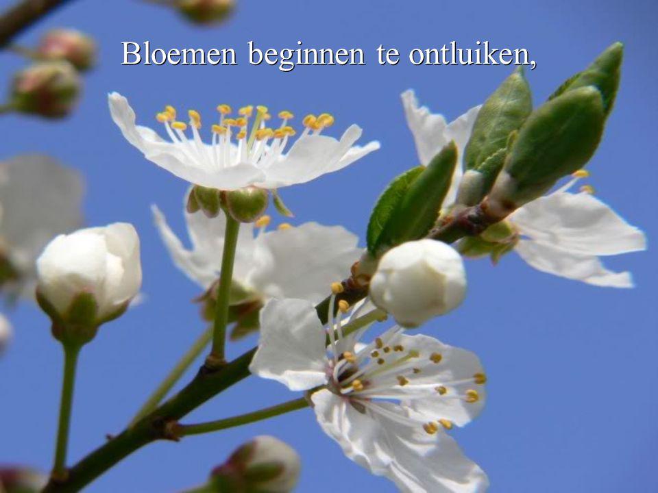 Bloemen beginnen te ontluiken,