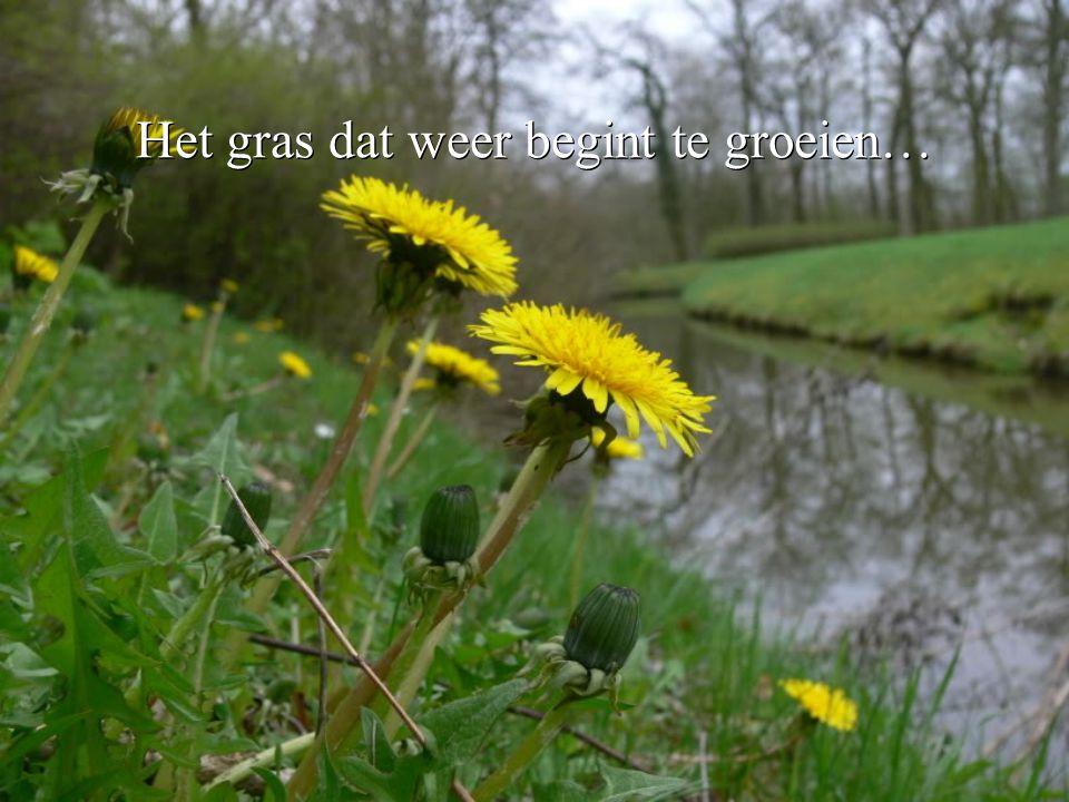 Het gras dat weer begint te groeien…