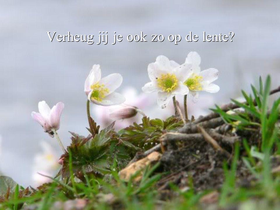 Verheug jij je ook zo op de lente