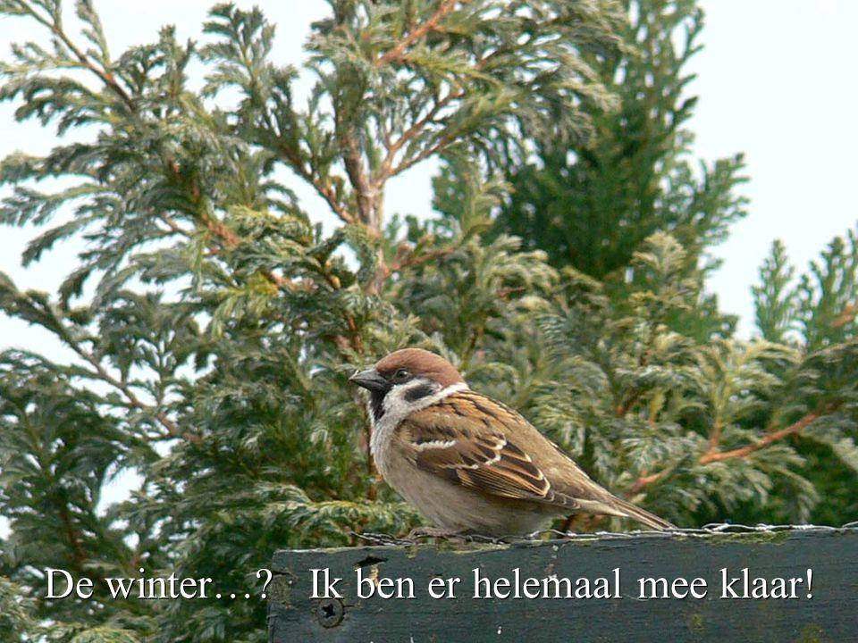 De winter… Ik ben er helemaal mee klaar!